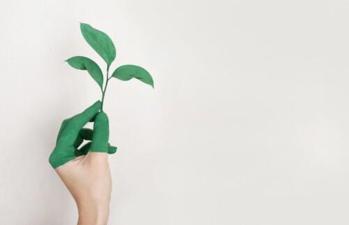 Recyclen van lenzen: wat kunt u doen?